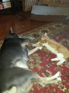 They even nap together!