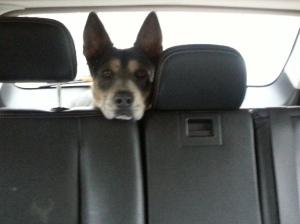 "Did someone say ""car ride?"""