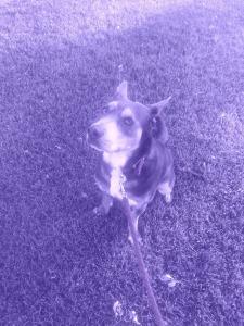 JJ's rockin' the purple to support epilepsy day!