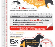 heartworm infographic