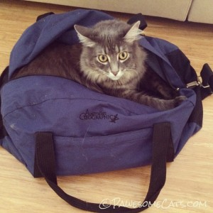 Handsome Max claims this blue bag to show his autism support!