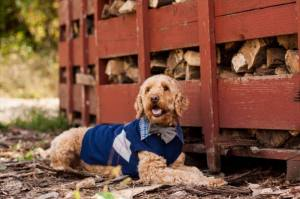 Spencer the Goldendoodle is happy to  help!