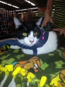 Cutie-Pie Sylvester is lighting it up blue!